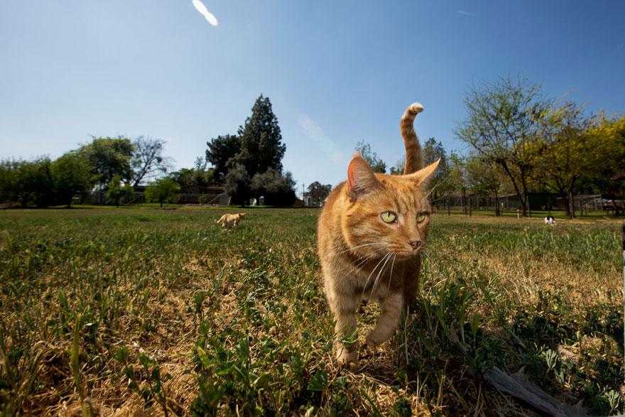 largest-cat-sanctuary-shelter-lynea-lattanzio-15