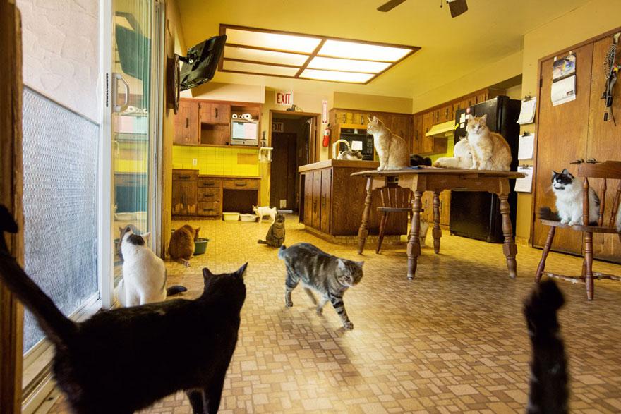 largest-cat-sanctuary-shelter-lynea-lattanzio-2