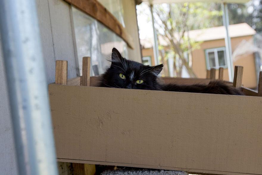 largest-cat-sanctuary-shelter-lynea-lattanzio-20