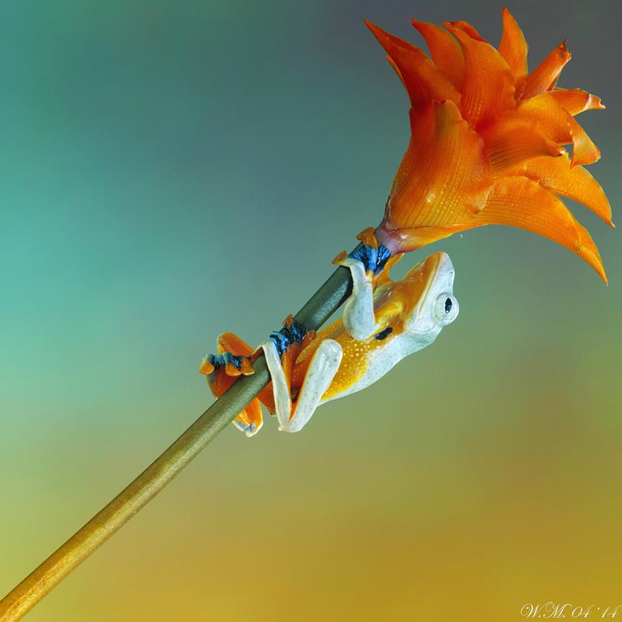 macro-frogs-wil-mijer-20