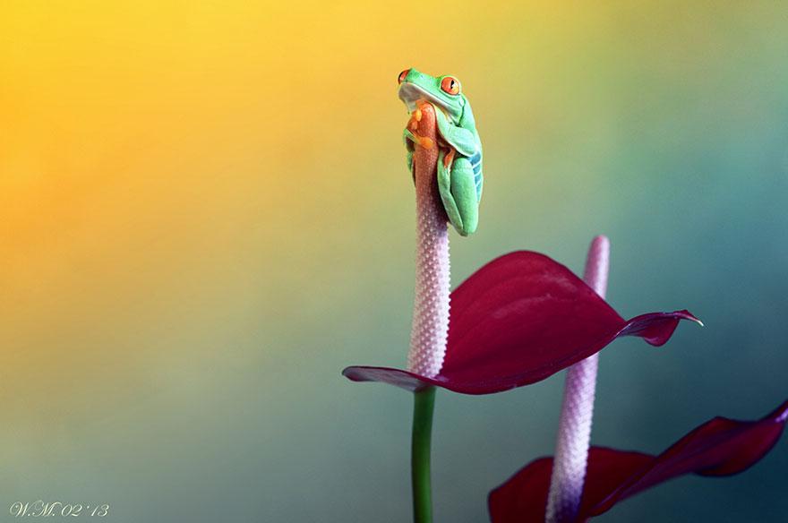 macro-frogs-wil-mijer-5