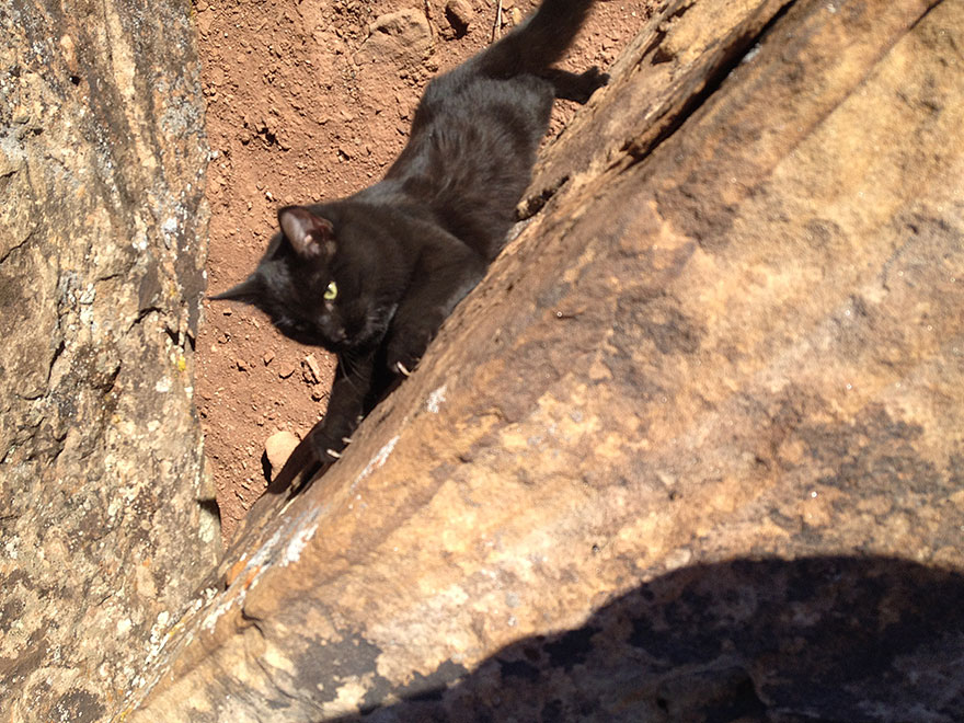 millie-climbing-cat-craig-armstrong-6