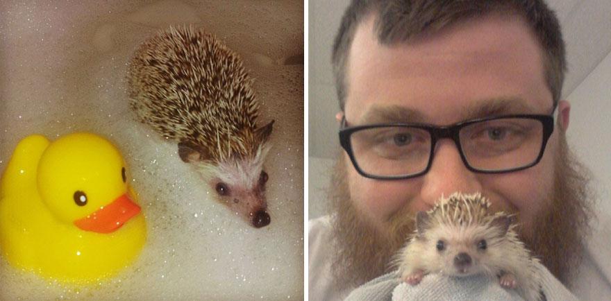 norman-cute-hedgehog-brett-jessie-17