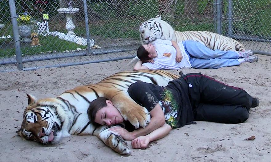 pet-tigers-janda-saber-janice-haley-7