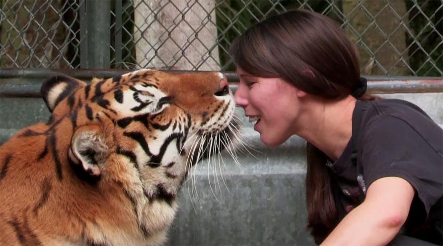pet-tigers-janda-saber-janice-haley-8