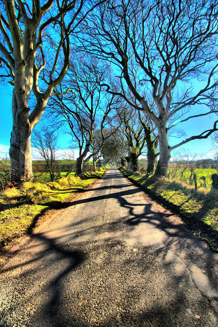 the-dark-hedges-tree-tunnel-13