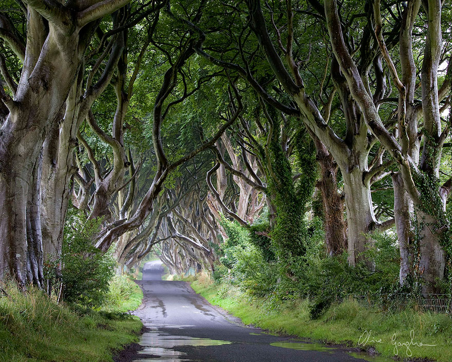 the-dark-hedges-tree-tunnel-17