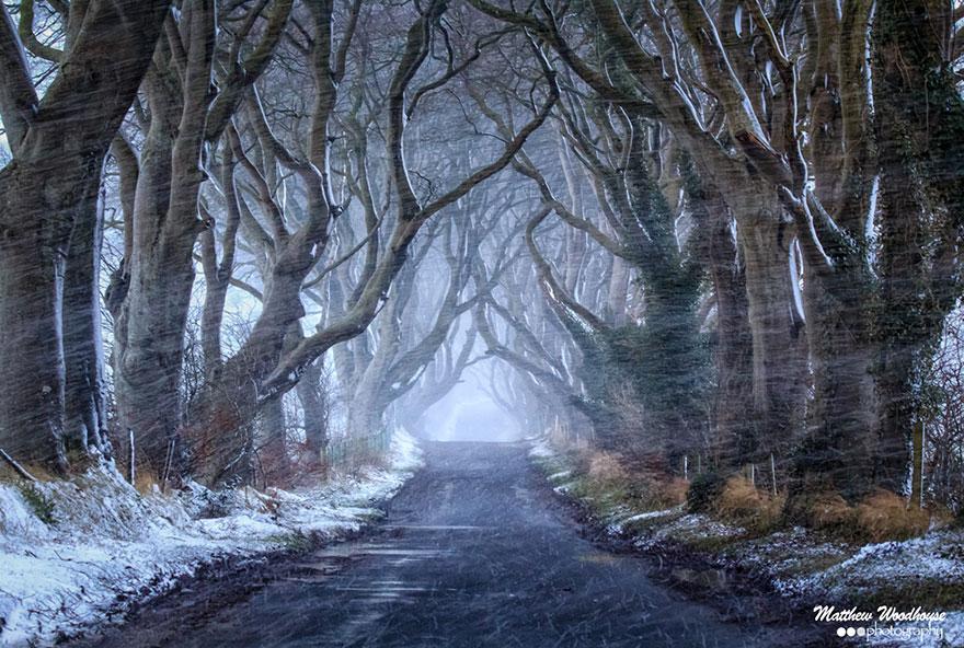 the-dark-hedges-tree-tunnel-3
