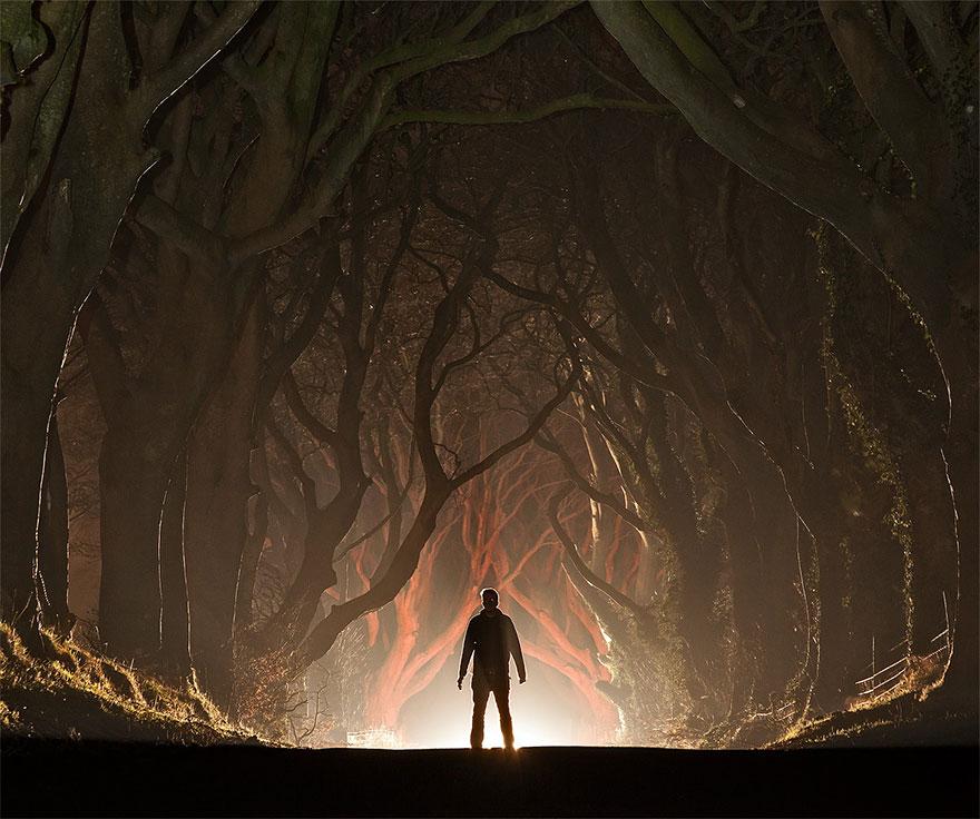 the-dark-hedges-tree-tunnel-6