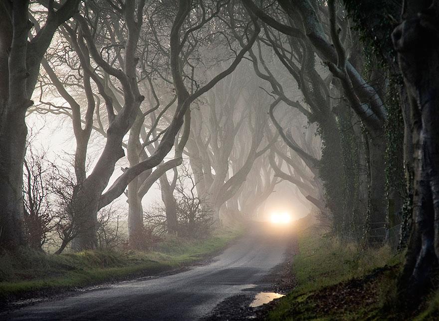 the-dark-hedges-tree-tunnel-9