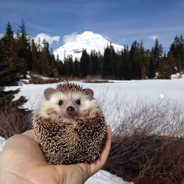 biddy-cute-hedgehog-adventures-14