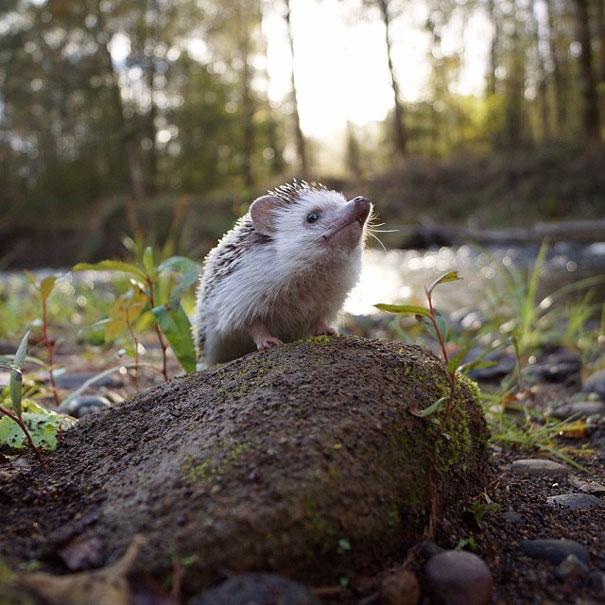 biddy-cute-hedgehog-adventures-15