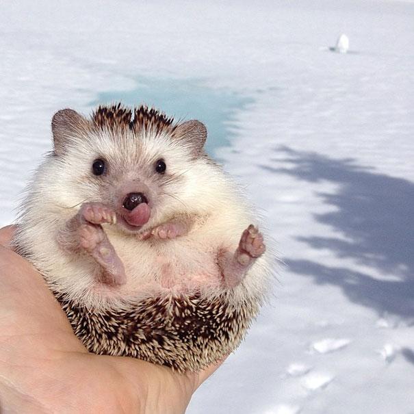 biddy-cute-hedgehog-adventures-26