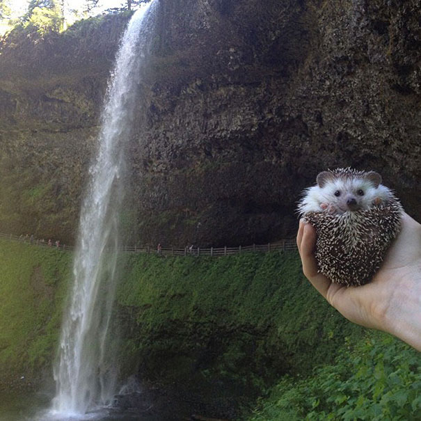 biddy-cute-hedgehog-adventures-8