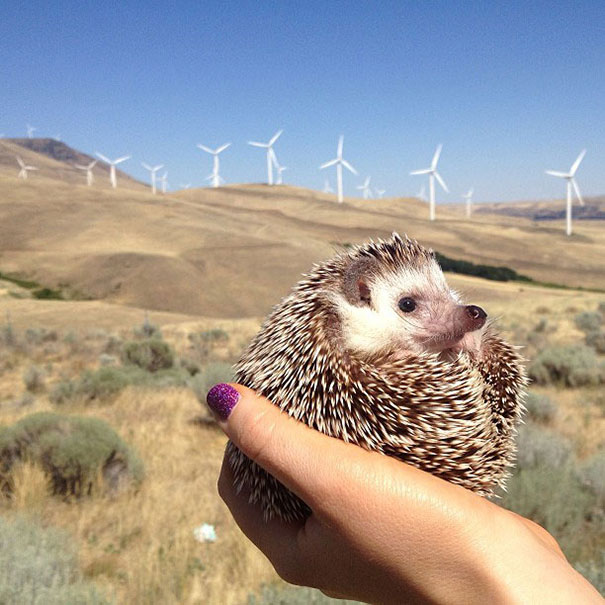 biddy-cute-hedgehog-adventures-9