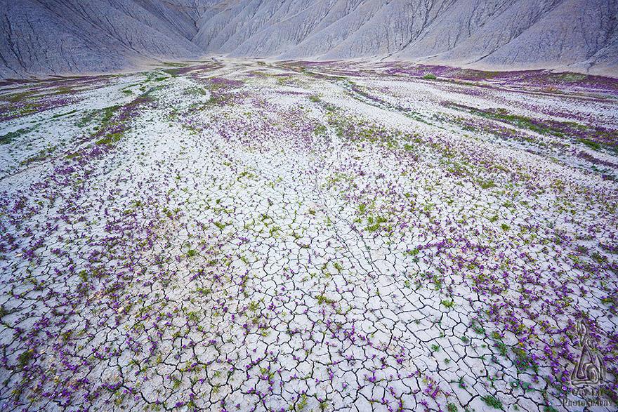 blooming-desert-badlands-utah-10