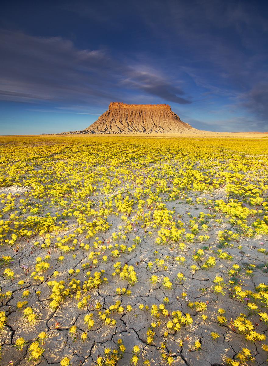 blooming-desert-badlands-utah-3