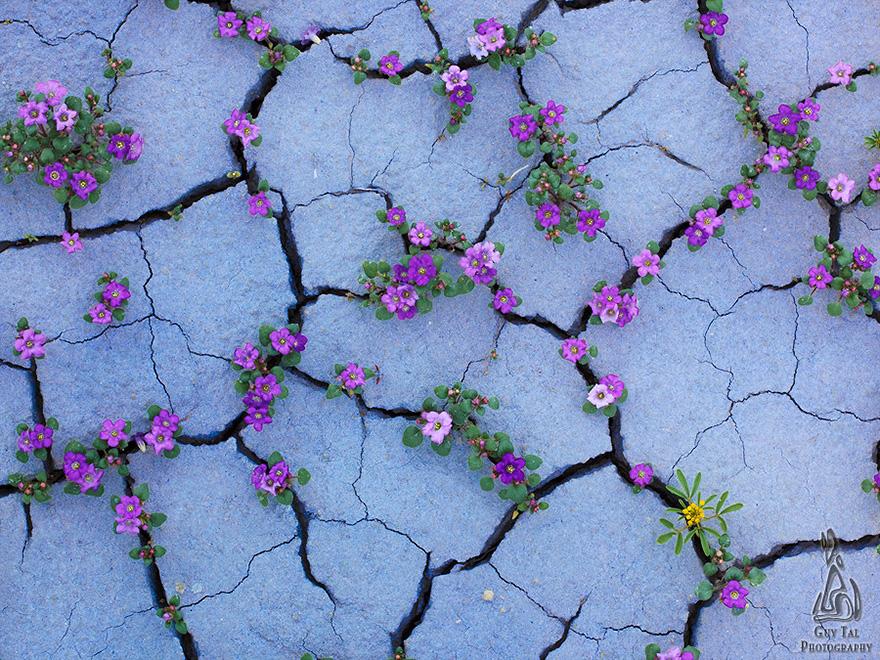 blooming-desert-badlands-utah-6