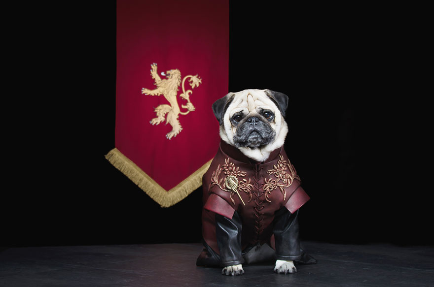 cute-pugs-game-of-thrones-pugs-of-westeros-3