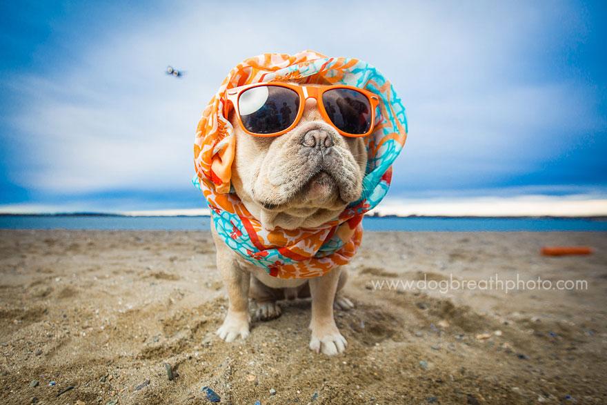 dogs-dog-breath-photography-kaylee-greer-28