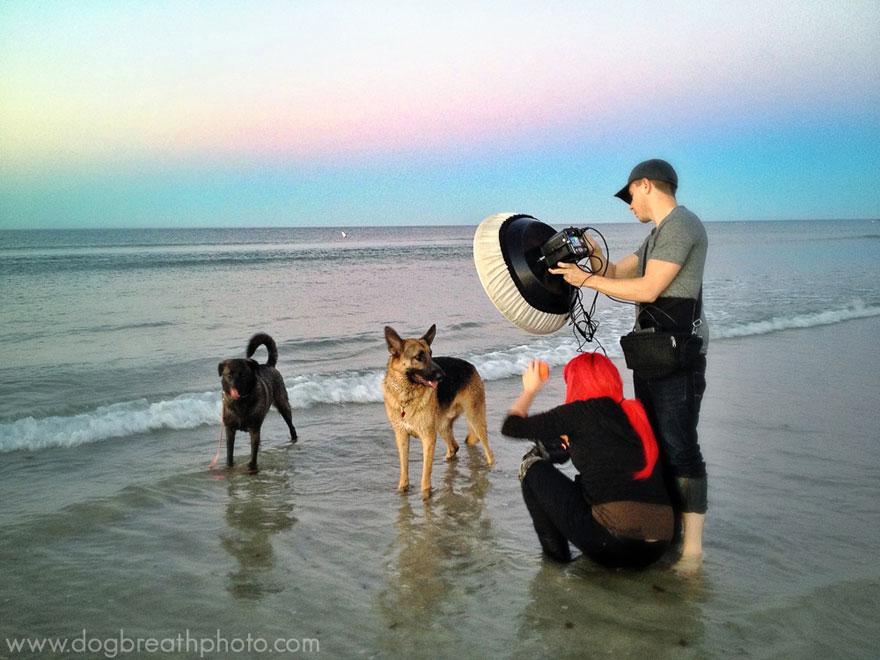dogs-dog-breath-photography-kaylee-greer-41