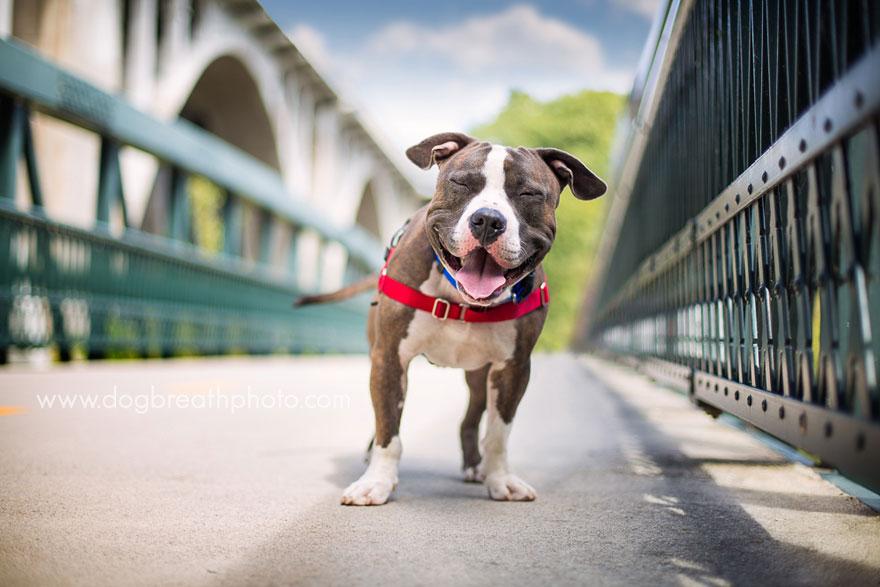 dogs-dog-breath-photography-kaylee-greer-5