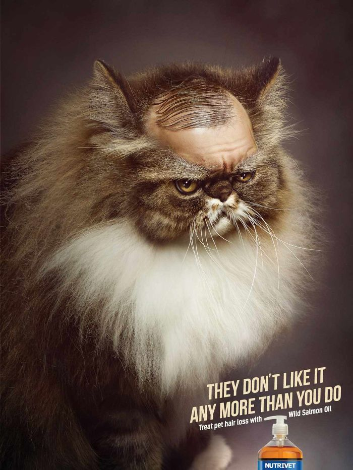 funny-ads-with-animals-36