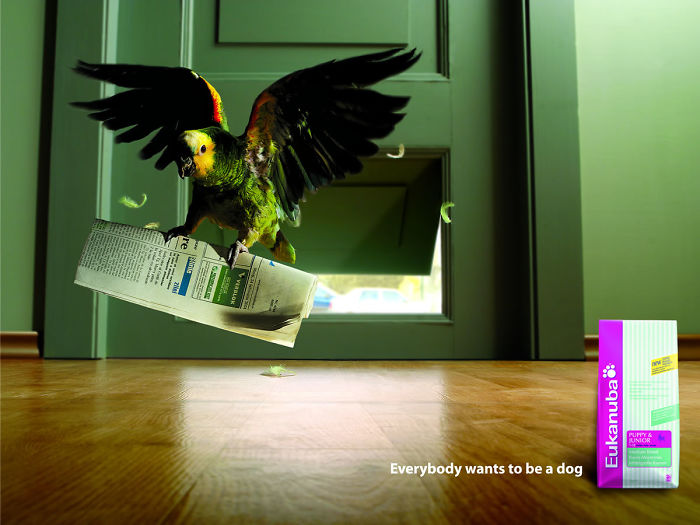 funny-ads-with-animals-53