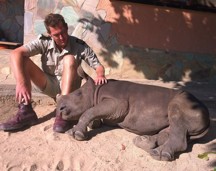 gertje-baby-rhino-rescue-hoedspruit-endangered-species-centre-6