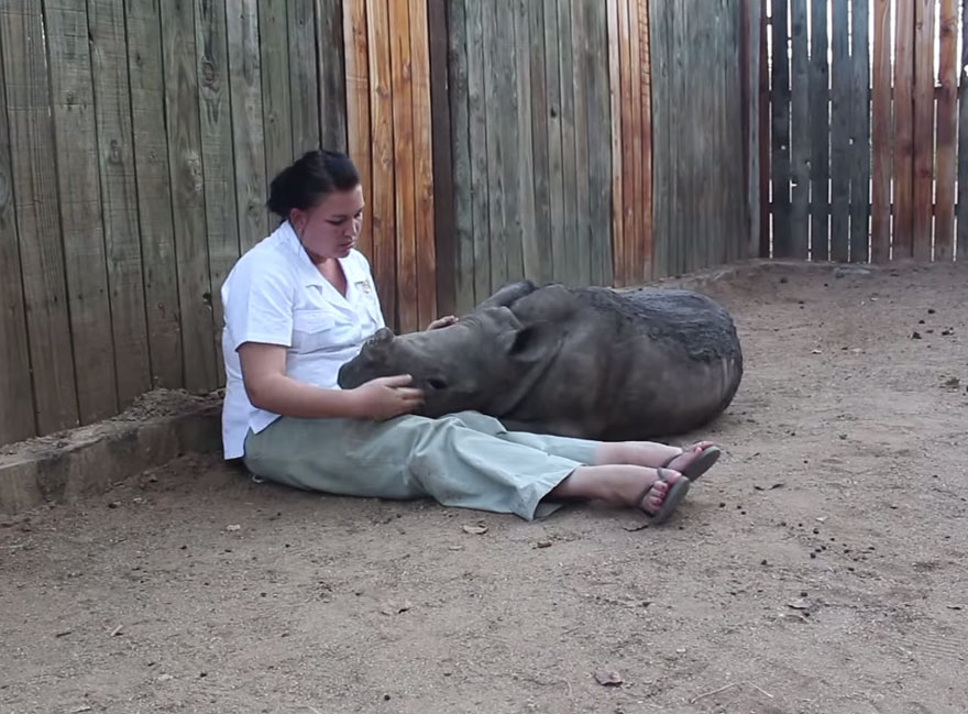 gertje-baby-rhino-rescue-hoedspruit-endangered-species-centre-8