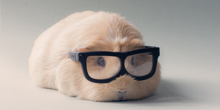 Booboo And His Friends Are The Most Adorable Guinea Pigs On The Internet