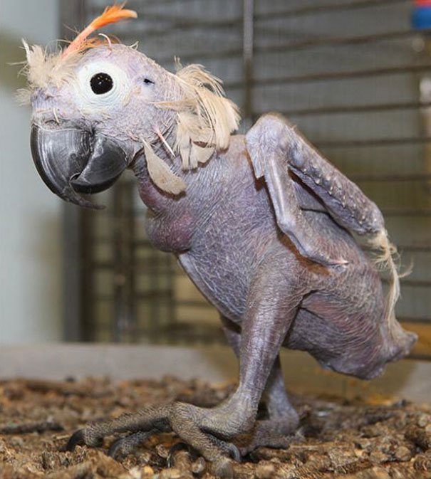 hairless-bald-animals-25