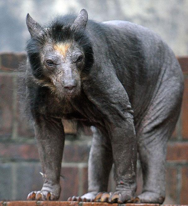hairless-bald-animals-5