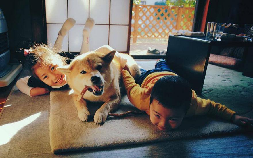 happy-dog-maru-shiba-inu-13