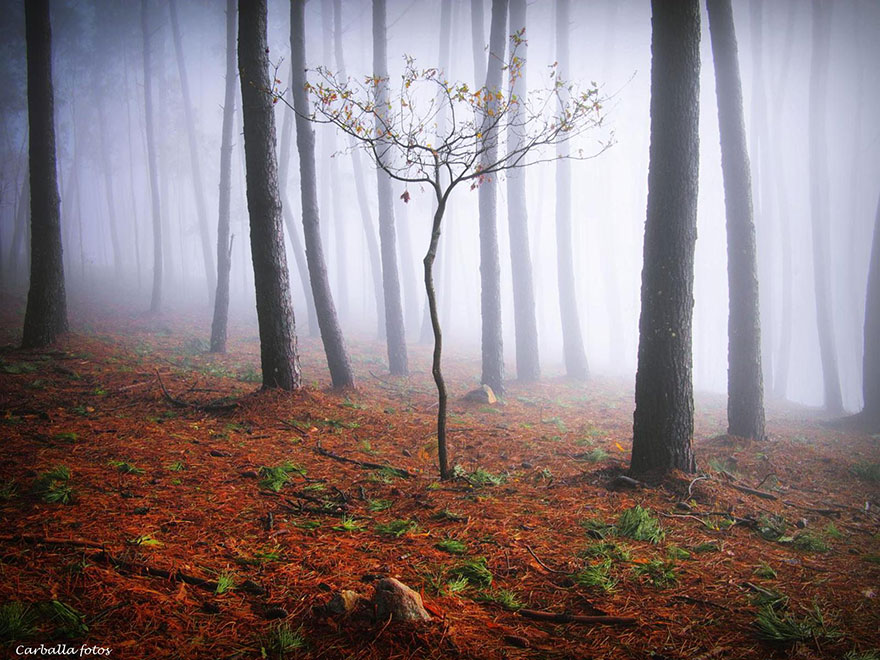 mystic-forest-lanscapes-guillermo-carballa-2