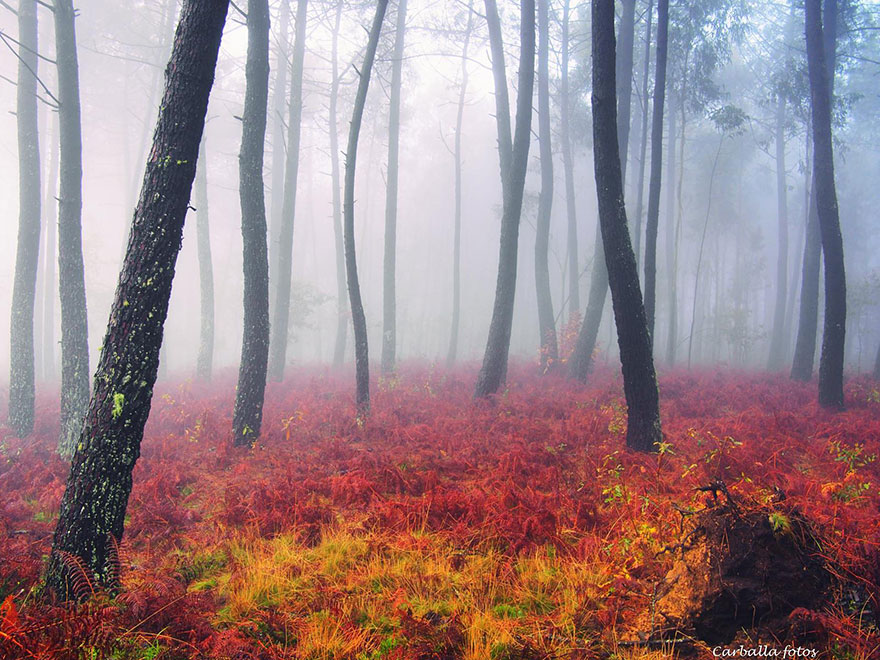 mystic-forest-lanscapes-guillermo-carballa-6