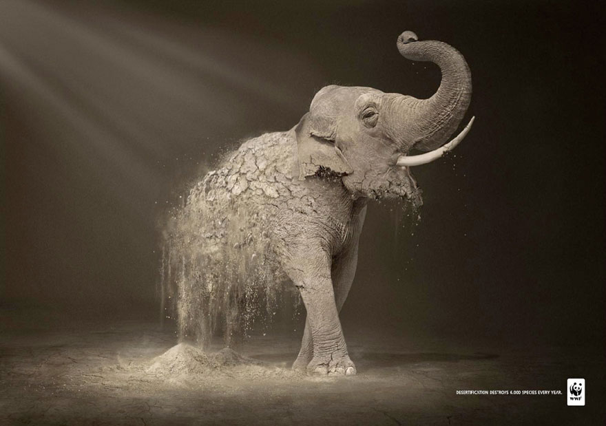 public-social-ads-animals-9