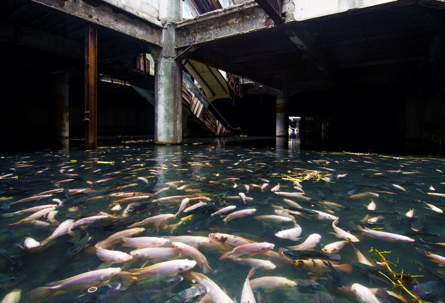 abandoned-shopping-mall-bangkok-fish-jesse-rockwell-6