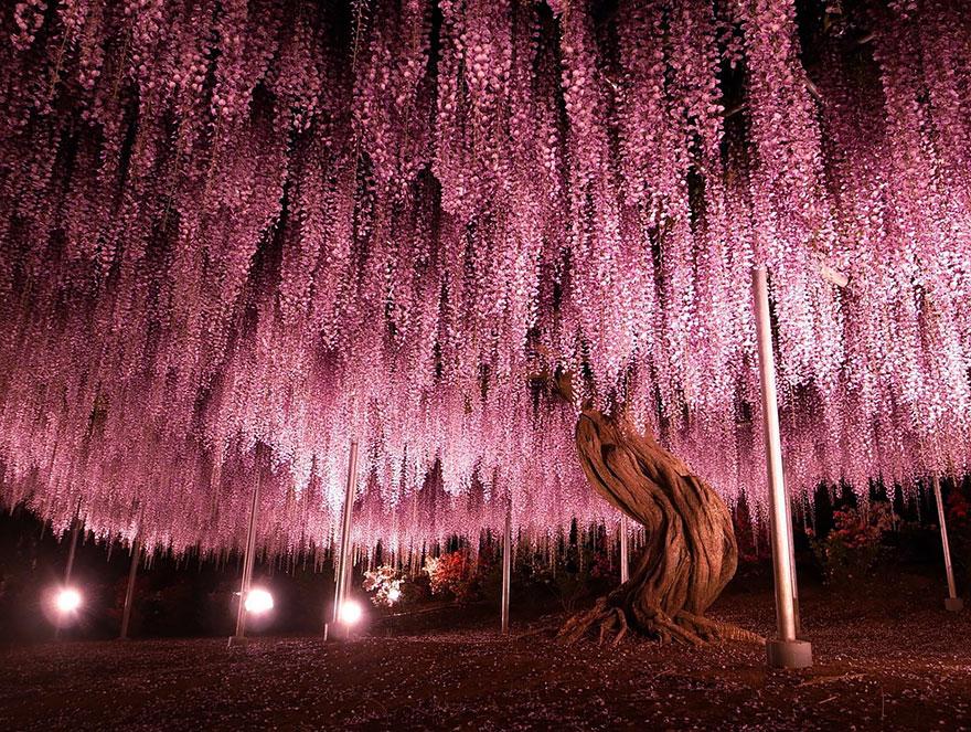 amazing-árboles-1-1