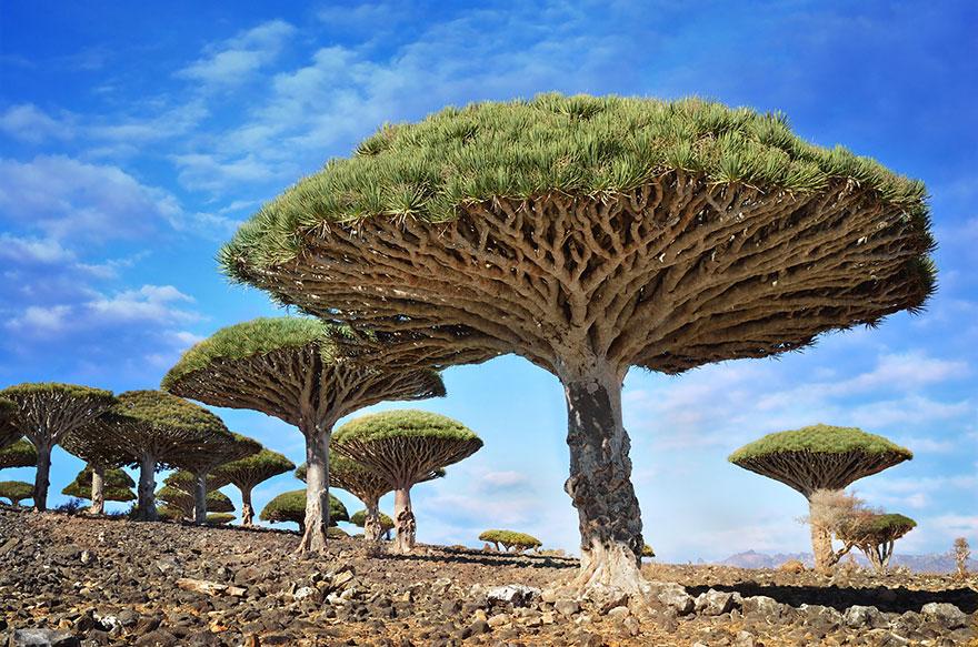 amazing-árboles-14