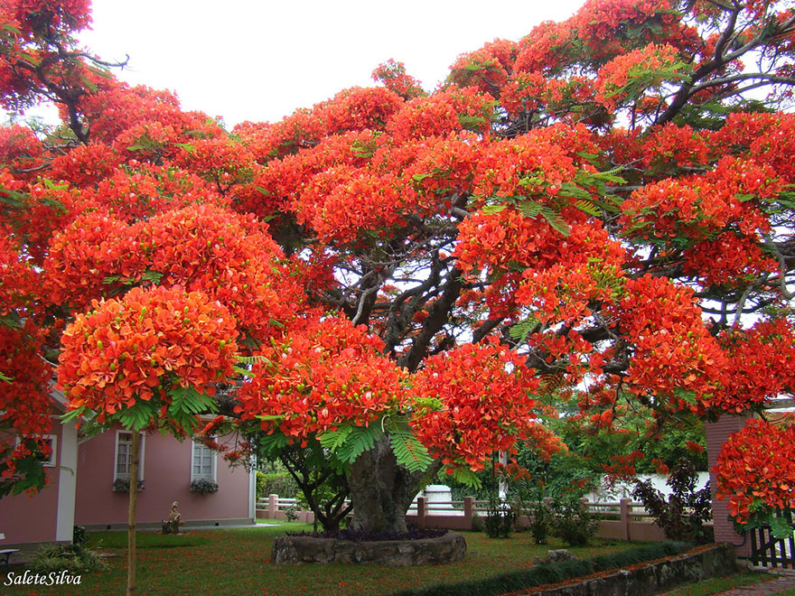 amazing-árboles-15