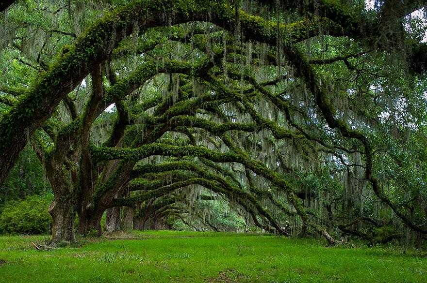amazing-árboles-17
