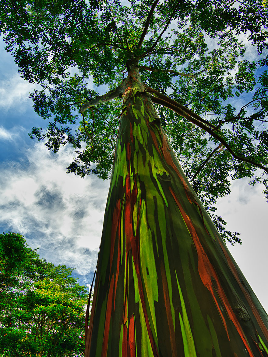 amazing-árboles-19-1