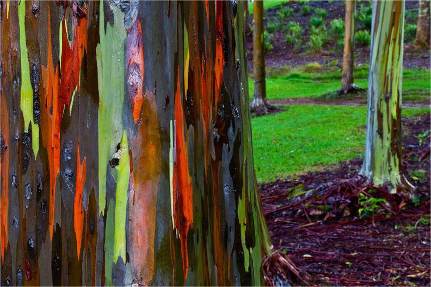 amazing-árboles-19-2