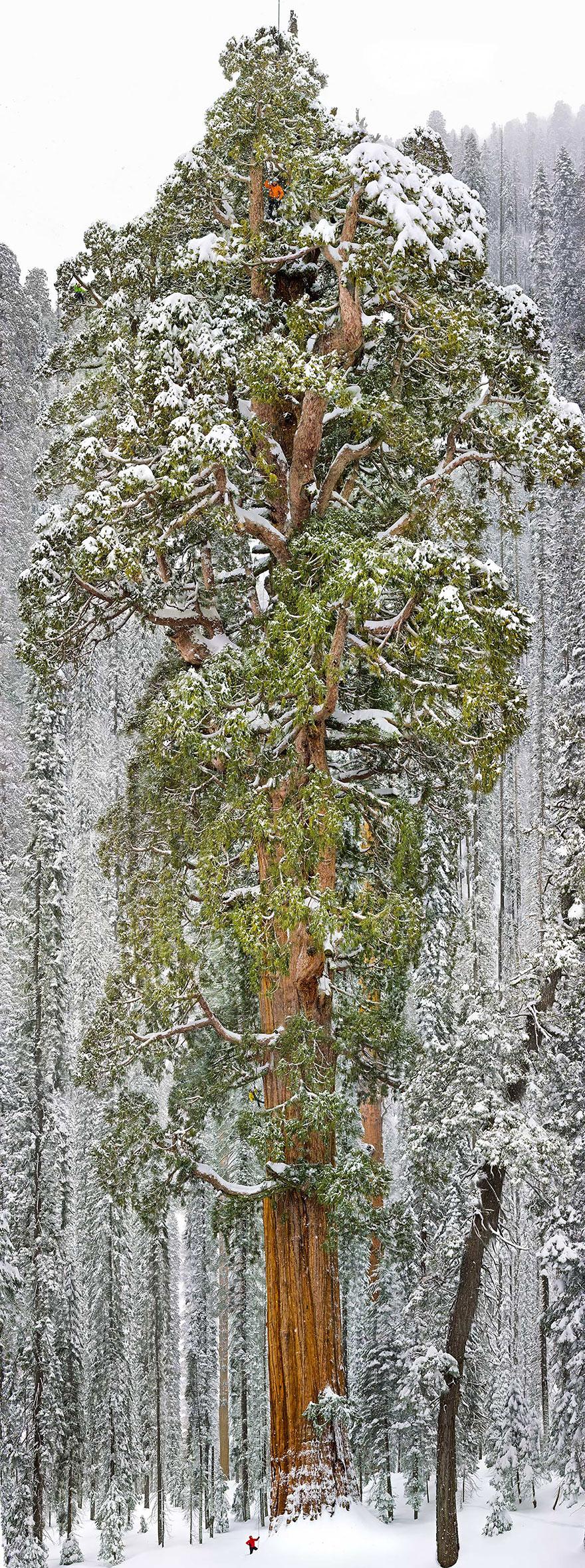 amazing-árboles-20