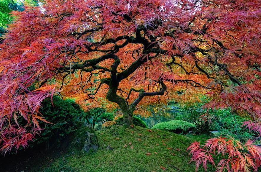 amazing-árboles-21