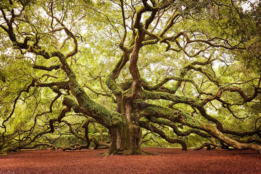 amazing-árboles-22