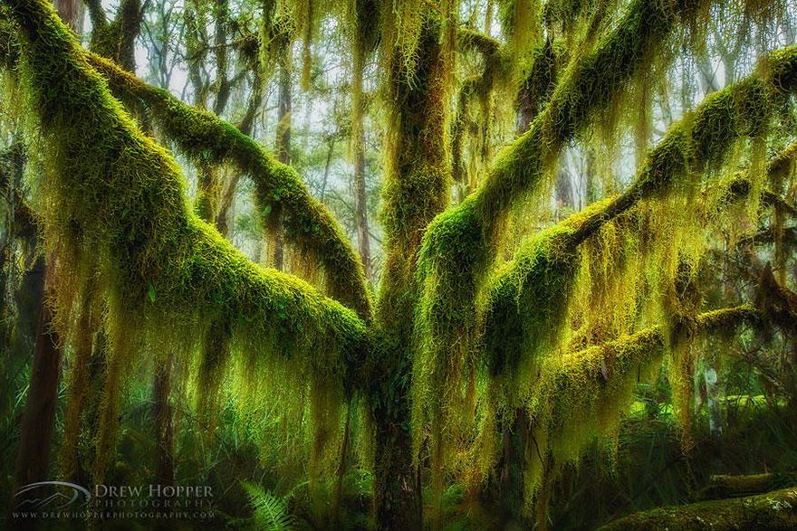 amazing-árboles-23