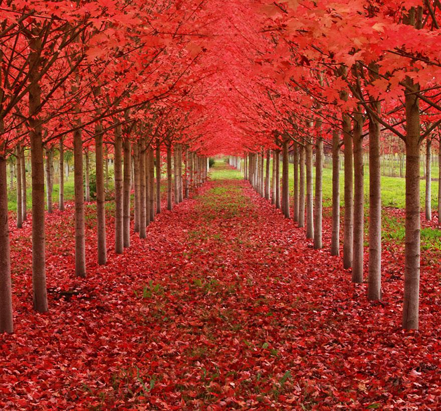 amazing-árboles-4