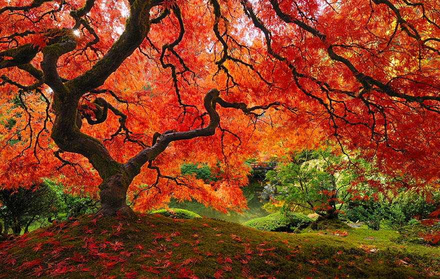 Amazing-arbres-8